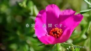 【初夢フェア2015】花編にてB'zの新曲「アマリニモ」公開.flv_snapshot_00.01_[2015.01.16_00.30.05]